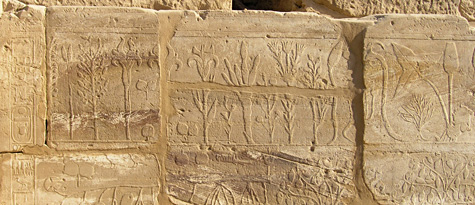 Botanical reliefs of Tuthmose III