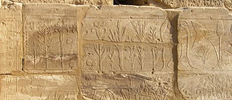 Botanical reliefs of Tuthmose III