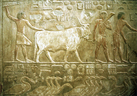 Agricultural scenes in the tomb of Akhethotep