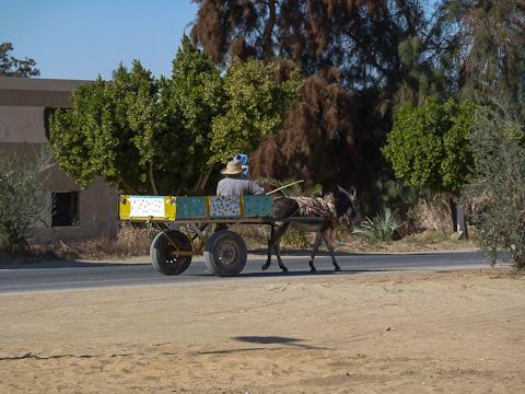Age old oasis transport